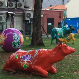 Cows cruising in Little India